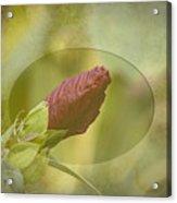 Artistic Hibiscus 2015-1 Acrylic Print