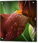 Artistic Iris Acrylic Print