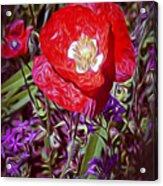 Artistic Kentucky Red Poppy Acrylic Print