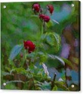 Artistic Last Rose Acrylic Print