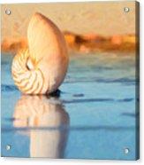 Artistic Nautilus Acrylic Print