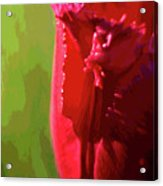 Artistic Red Tulip Acrylic Print