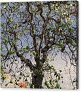 Artistic Tree Acrylic Print