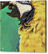 Aruba Yellow Acrylic Print