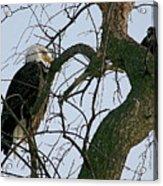 As The Eagle Looks On Acrylic Print