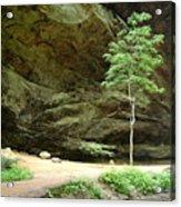 Ash Cave Tree Acrylic Print