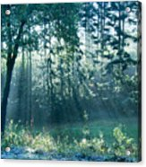 Ashenvale Forest Acrylic Print