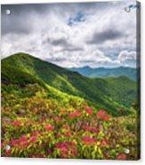 Asheville Nc Blue Ridge Parkway Spring Flowers North Carolina Acrylic Print