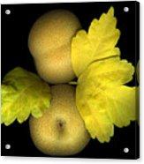 Asian Brown Pears Acrylic Print