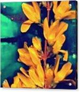 Asian Flower Acrylic Print