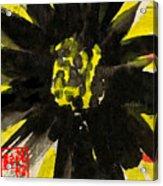 Asian Sunflower Acrylic Print