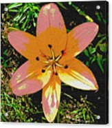 Asiatic Lily With Sandstone Texture Acrylic Print