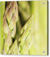 Asparagus Spears Macro Acrylic Print