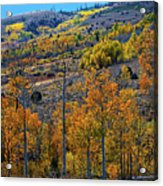 Aspen Cascades In The Sierra Acrylic Print
