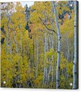 Aspen Colors Acrylic Print