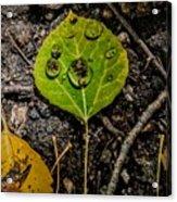 Aspen Dew Acrylic Print