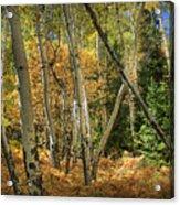 Aspen Ecosystem Acrylic Print