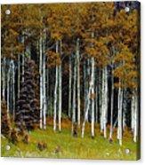 Aspen Fall Digital Acrylic Print