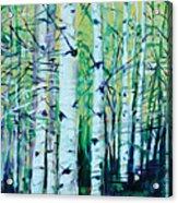 Aspen Fall Acrylic Print