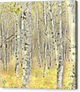 Aspen Forest 2 - Photo Painting Acrylic Print
