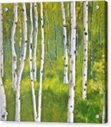 Aspen Forest Acrylic Print by Heather Matthews