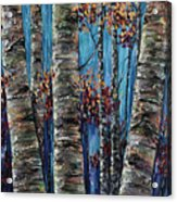 Aspen Forest In The Rocky Mountain Acrylic Print