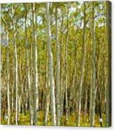 Aspen Forrest Acrylic Print