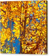 Aspen Glow Autumn Sky Acrylic Print