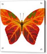 Aspen Leaf Butterfly 2 Acrylic Print