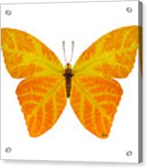 Aspen Leaf Butterfly 3 Acrylic Print