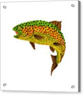 Aspen Leaf Rainbow Trout 1 Acrylic Print