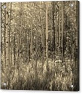 Aspen Light Acrylic Print