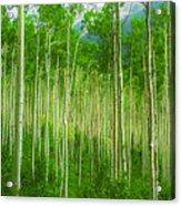 Aspen Pano Acrylic Print by Stuart Deacon