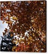 Aspen Shade Acrylic Print