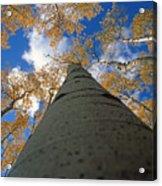 Aspen Sky Acrylic Print