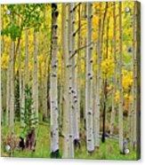 Aspen Slope Acrylic Print