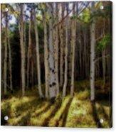 Aspen Sunbeams Acrylic Print