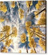 Aspen Tops Towards The Sky Vintage  Acrylic Print