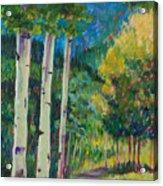 Aspen Trails Acrylic Print