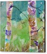 Aspen Trees Acrylic Print