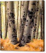 Aspen Trees With Ferns Acrylic Print