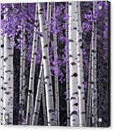 Aspen Trunks Lavender Leaves Acrylic Print
