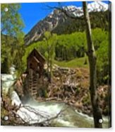 Aspens Around The Crystal Mill Acrylic Print