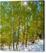 Aspens At Pine Creek Basin Acrylic Print
