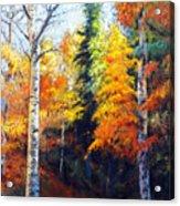 Aspens In Fall. Acrylic Print