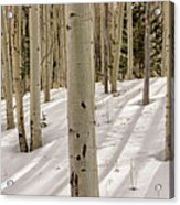 Aspens In Winter 2 Panorama - Santa Fe National Forest New Mexico Acrylic Print