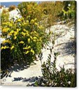 Assateague Beach 5 Acrylic Print