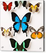 Assorted Butterflies Acrylic Print