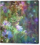Aster 5077 Idp_2 Acrylic Print