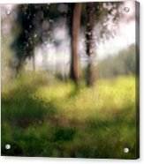 At Menashe Forest Acrylic Print